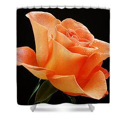 A Single Bloom 1 Shower Curtain by Wendy Wilton