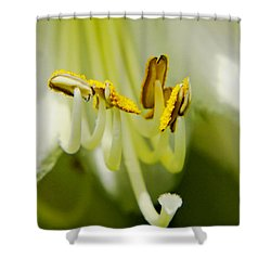 A Single Flower In Full Bloom Shower Curtain