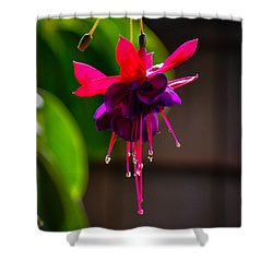 A Special Red Flower  Shower Curtain