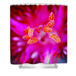 Shower Curtain featuring the photograph A Splash Of Colour by Wendy Wilton