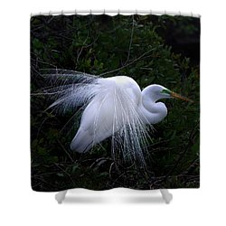 A Stand Out Shower Curtain by Skip Willits