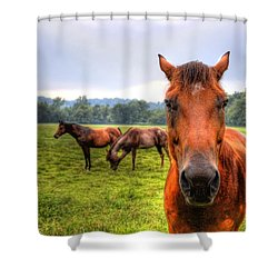 A Starring Horse 2 Shower Curtain by Jonny D