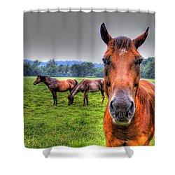 A Starring Horse Shower Curtain by Jonny D