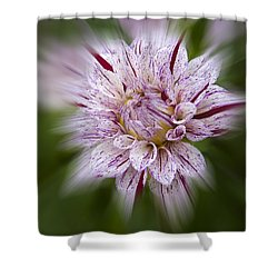 A Taste Of Wine Shower Curtain