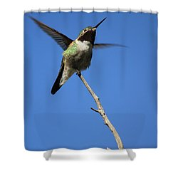 A Tiny Flutter Shower Curtain
