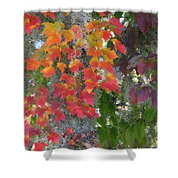 A Touch Of Autumn Shower Curtain by Mariarosa Rockefeller