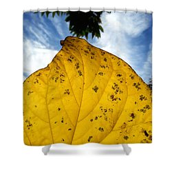 A Touch Of God Shower Curtain