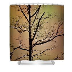 A Tree By The Lake Shower Curtain