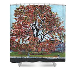 A Tree In Sherborn Shower Curtain