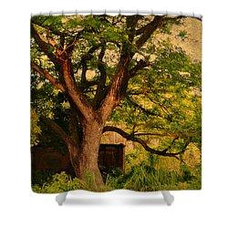 A Tree Shower Curtain by Jenny Rainbow