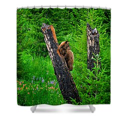 A Tree With A View Shower Curtain