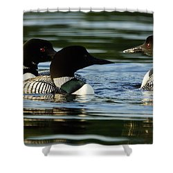 A Trio Of Loons Shower Curtain