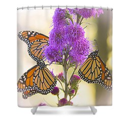 A Trio Of Monarchs Shower Curtain