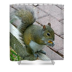 A Two-nut Lunch Shower Curtain by Mariarosa Rockefeller