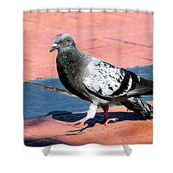 A Walk In The Square Shower Curtain