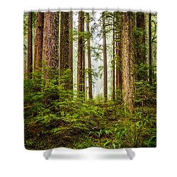 A Walk Inthe Forest Shower Curtain by Ken Stanback