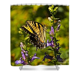 A Warm September Day In The Garden Shower Curtain