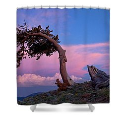 A Westerly Wind Shower Curtain