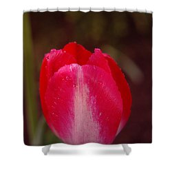 A Wet Tulip Shower Curtain by Jeff Swan