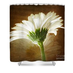A White Gerber Daisy Against A Vintage Backdrop Shower Curtain