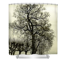 A Winter Touch Shower Curtain by Syed Aqueel