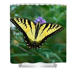 A Yellow Butterfly Shower Curtain by Raymond Salani III