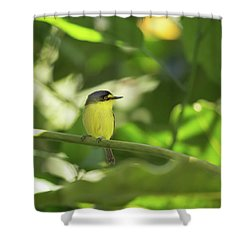 A Yellow-lored Tody Flycatcher Shower Curtain