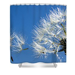 About To Leave - Dandelion Seeds Shower Curtain