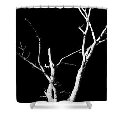 Abstract Branches Shower Curtain