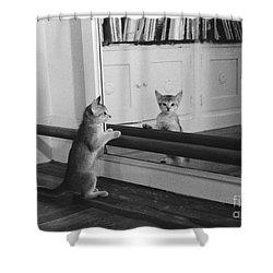 Abyssinian Kitten In Dance Studio Shower Curtain by Joan Baron