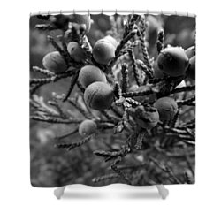 Acclimated Bw Shower Curtain