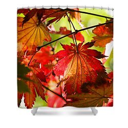 Acer Japonicum O Isami Shower Curtain by Anne Gilbert