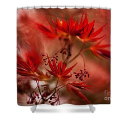 Acer Storm Shower Curtain by Mike Reid