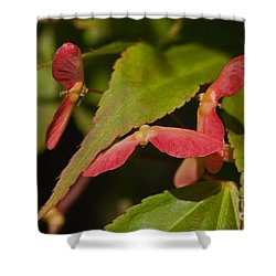 Acer Wings Shower Curtain