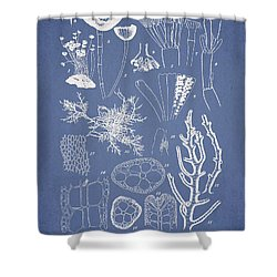 Acetabularia Caraibica And Chondria Intricata Shower Curtain by Aged Pixel