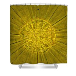 Actinophrys Sol Lm Shower Curtain by James W Evarts