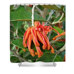 Shower Curtain featuring the photograph Adaptable Exotic by Cheryl Hoyle