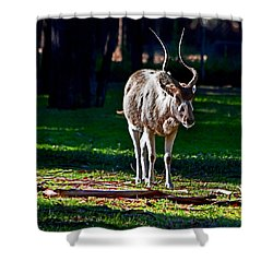 Addax Shower Curtain
