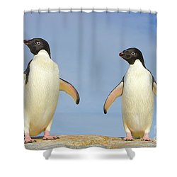 Adelie Penguin Duo Shower Curtain by Yva Momatiuk John Eastcott
