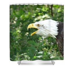 Shower Curtain featuring the photograph Adler Raptor Bald Eagle Bird Of Prey Bird by Paul Fearn
