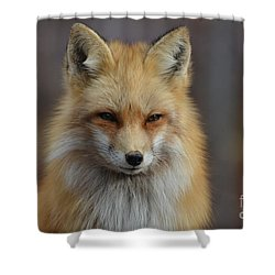 Adorable Red Fox Shower Curtain