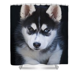 Adorable Siberian Husky Sled Dog Puppy Shower Curtain