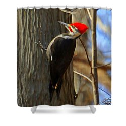 Adult Male Pileated Woodpecker Shower Curtain