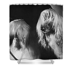 Afghan Hound Shower Curtain by ME Browning