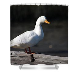 Aflac Shower Curtain by Greg Graham