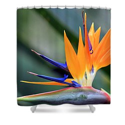 Aflamed Shower Curtain