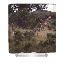 Africa Dream Shower Curtain
