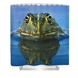 African Bullfrog Shower Curtain by Frans Lanting MINT Images