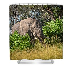 African Bush Elephant Shower Curtain