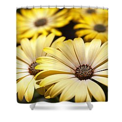 African Daisies Shower Curtain by Caitlyn  Grasso